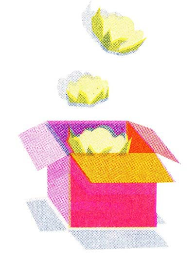 Humanitas illustration of cauliflowers in a box